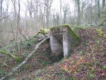 Bois de Bezange 5141