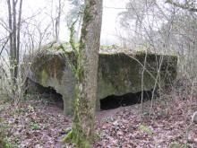 Bois de Bezange 5353