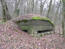 Bois de Bezange 5365