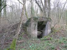 Bois de Bezange 5453