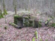 Bois de Bezange 5535