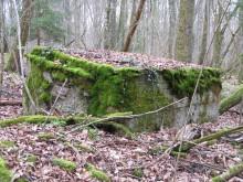 Bois de Bezange 5609