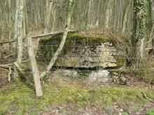 Bois de Bezange 5632