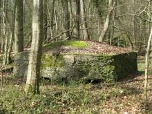 Bois de Bezange 5638