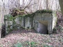 Bois de Bezange 5671