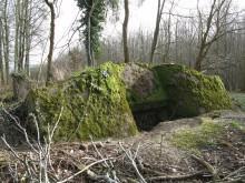 Bois de Bezange 5721