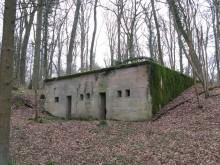 Bois de Bezange 5784