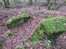 Forêt de Parroy